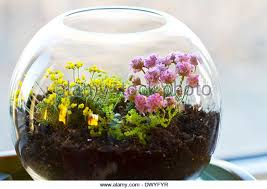 terrarium plants be equipped where to buy succulent terrarium be