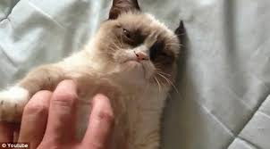 Grumpy Cat Has Died Youtube - what is wrong with grumpy cat poc