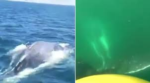 family rescues humpback whale entangled in fishing nets metro news