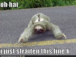 Funny Sloths Memes - i love sloths funny stuff pinterest sloth humor and sloth humor