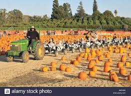 Pumpkin Patch Moorpark by Moorpark Stock Photos U0026 Moorpark Stock Images Alamy