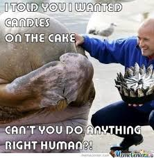 Birthday Animal Meme - humans ruining animals birthdays since 1969 by boredperson meme
