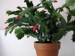 Easy Care Indoor Plants Easy Houseplants That Are Hard To Kill