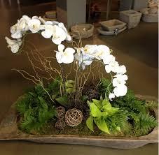 Indoor Plant Arrangements Roots