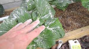 Starting An Organic Vegetable Garden by Organic Pest Control For Vegetable Gardens Youtube