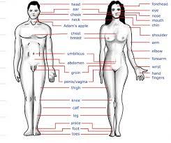 Female Anatomy Organs Woman Human Body Parts Anatomy Human Body Parts Women Anatomy