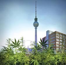 cannabis legalisierung kiffer erwarten drogen revolution welt