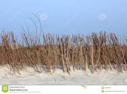 fascine for the dune protection on the island of sylt stock photo