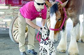 Budweiser Clydesdale Barn World Famous Clydesdales Coming Back To Mardi Gras Port Arthur News