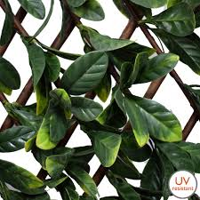 variegated laurel leaf trellis by olore home 1m x 2m weather proof