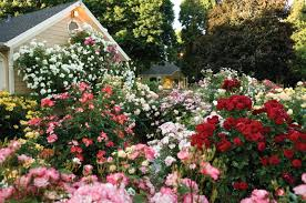 Cottage Gardening Ideas How To Grow A Modern Day Cottage Garden