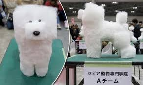 summer haircut pomeranian should you shave your pet for summer diamond diamond