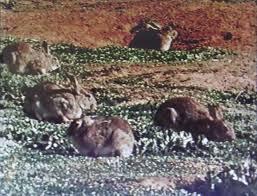 invaders feral animals u0026 pests in australia youtube