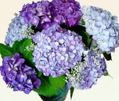 How To Revive Flowers In A Vase Keep Your Cut Hydrangea Blooms From Wilting In The Vase Simple I