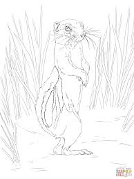 antelope squirrel coloring page free printable coloring pages