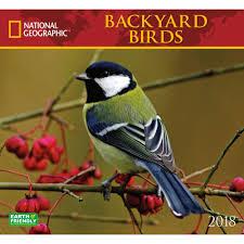 backyard birds photos home design inspirations