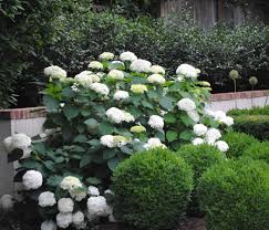 Top Flowering Shrubs - jen halbesma design u0027s blog u2013 top flowering shrubs