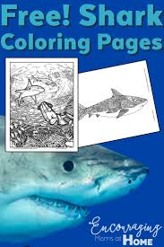 free science coloring pages best 25 shark coloring pages ideas on pinterest