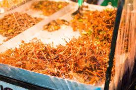 insectes cuisine image insectes cuisine de rue thaïlande les