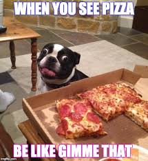 Meme Pizza - hungry pizza dog latest memes imgflip