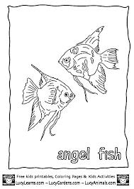 29 u003c u003e animal coloring images coloring sheets