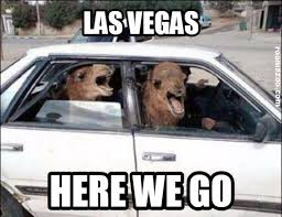 Camel Memes - funny las vegas picture crazy camel fun meme pic funny animals