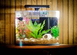 fish tank ornament ideas