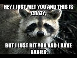 Best Animal Memes - best animal memes 2017 youtube
