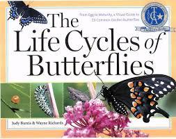 mrs levesque u0027s kindergarten class may week 2 schedule butterflies