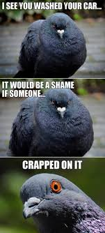 Funny Poop Memes - bird poop meme 30 funny animal captions part 9 funny animal