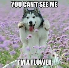 Cute Memes - cute dog memes