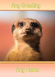 personalised meerkat greeting card any occasion gifts u0026bobs