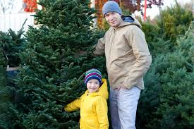 best places to cut your own christmas tree in la cbs los angeles