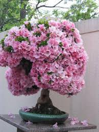 the most beautiful and unique bonsai trees in the