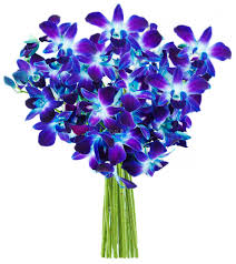 dendrobium orchids blue sea of orchids 10 stems