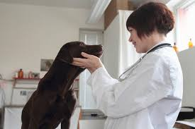 What Causes Dogs To Go Blind How To Give Your Blind Dog A Great Life