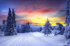 norway winter snow tree christmas tree forest road traces sunset