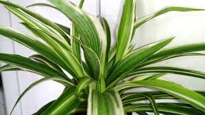best indoor plants capital garden services