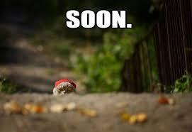 Soon Meme - cat soon mad cow club meme