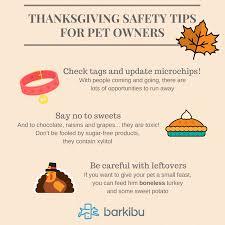8 thanksgiving safety tips for pet owners barkibu es