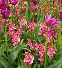 wall flowers 14 best wallflowers images on flower plants beautiful