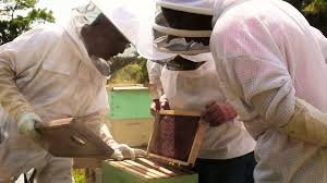 backyard beekeepers are buzzing wlrn