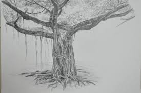 4 drawing trees u2013 my drawing course
