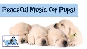 peaceful pups music music for all breeds of dogs prevent barking