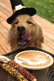 thanksgiving day turkey images 120 best thanksgiving images on pinterest turkey dog stuff and