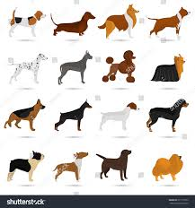 seth different breeds dogs color flat stock vector 617716763