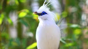love parrots birds images