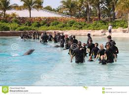 dolphin show atlantis bahamas editorial stock image image 16122589