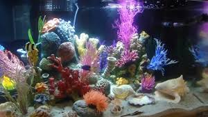 120 gallon saltwater aquarium artificial reef with fish youtube