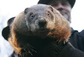 groundhog phil sees shadow predicts weeks